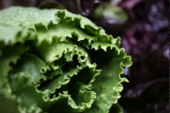 Få fler att äta grönt. Tips från Findus kockar.